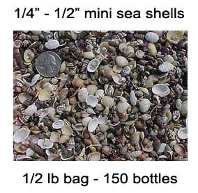 SEA SHELLS - MINI BOTTLES